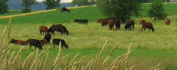 cows-pasture2-slider