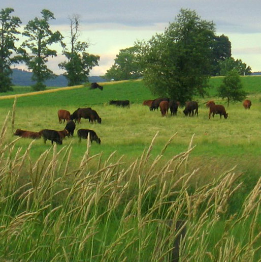 Grass-fed Beef in Berks County PA